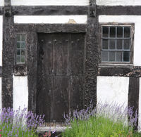 Lavender in front of an old  half-timbered house