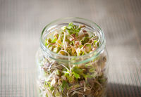 Mix of cereal sprouts growing in glass jar