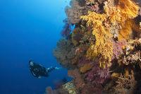 Taucher und Korallenriff, Australien
