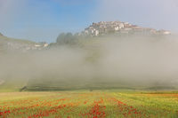 Castelluccio with poppy fields in morning Fog, Umbria, Italy