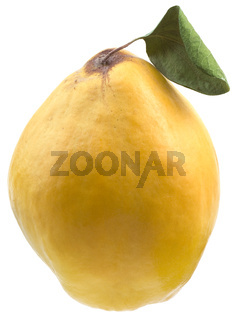 Quince Cutout