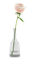 pink rose in glass vase isolated on white background