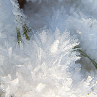 A blade of gras in ice mist
