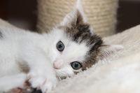 Cat - little