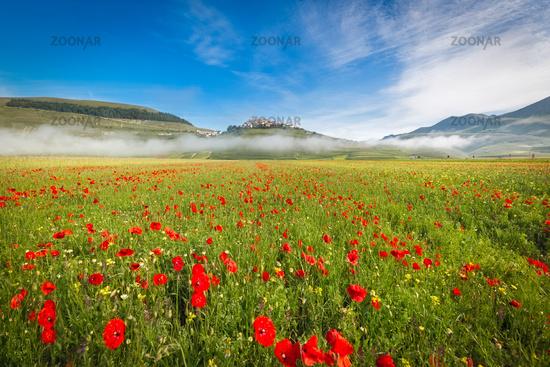 Fioritura at Piano Grande in morning fog, Umbria, Italy