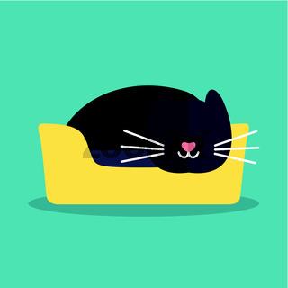 Cat is sleeping2