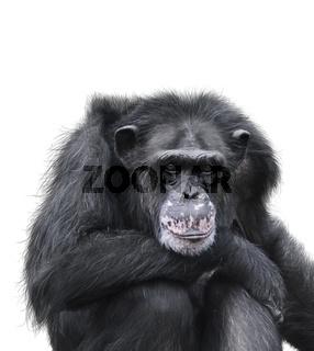 Black Chimpanzee