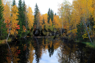 yellow leaves on the salmon river