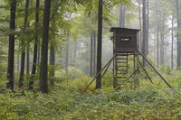 Hunting Blind in Beech forest