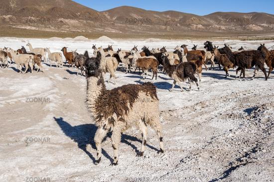 Salt lake - Salar de Uyuni in Bolivia