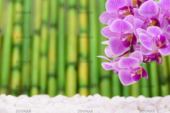 Japanese ZEN garden with orchid