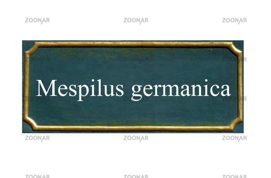 shield mespilus germanica