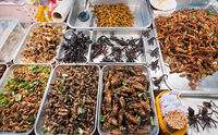 insects exotic food