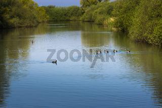 Landschaft am Dümmer See-110