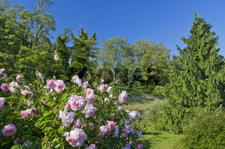 Garten auf Insel Mainau ### Garden at Mainau Island