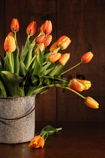 Yellow and orange tulips in old bucket