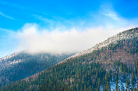 Winter in the Carpathians Mountains