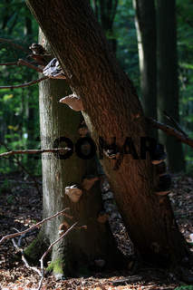 Weltnaturerbe Grunsiner Wald, Brandenburg