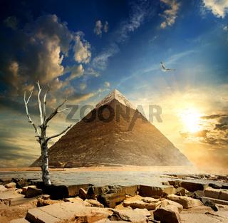 Pyramid and dry tree