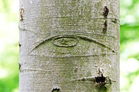 All-Seeing Eye of God on a tree bark