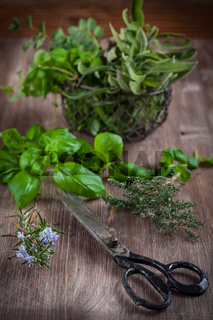 Different fresh herbs with vintage garden scissors on wooden background