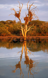 Nachmittagslicht am Sunset Dam im Kruger Nationalpark Südafrika, golden light at Sunset Dam, Kruger NP, South Africa