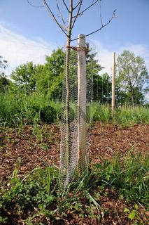 Wildschutz-Manschette, Tree-protect
