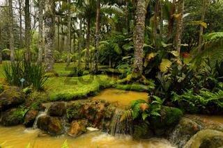 Park Terra Nostra in Furnas, Sao Miguel, Azores