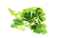 bunch of coriander