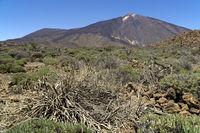Teide. Volcano on the Canary island of Tenerife