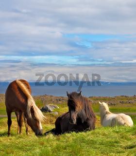 Well-groomed horses grazing