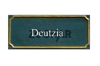schild Deutzia, Deutzien,deutzie