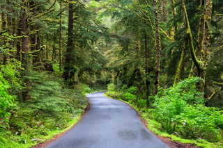 Road running in temperate rainforest of Oregon coast USA
