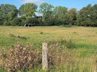 Pasturage In Schleswig-Holstein
