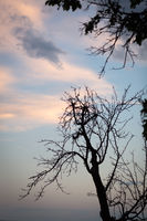 Silhouettes of trees against pink and blue sky in