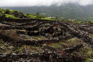 Pico Island Vineyard Culture, World heritage site, Azores