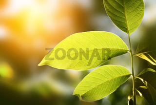 green leaf on blur background