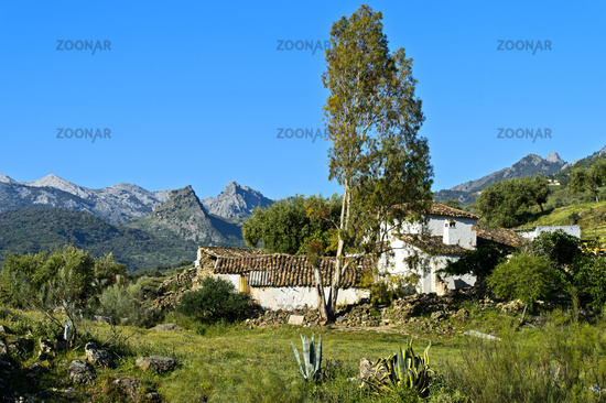 Finca with Eucalyptus tree in the Sierra de Grazalema natural park, Andalusia, Spain