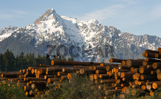 Logging Camp Whithorse Mountain Darrington Washington Stacked Logs