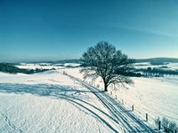Snow landscape with tree