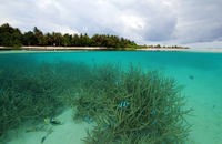 Tropical Island and Coral Reef