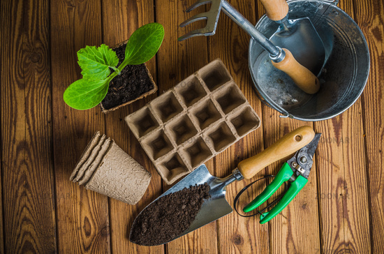Seedlings and garden tools on a wooden surface, top view