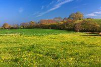 Wiese im Frühling mit Löwenzahn in Schleswig-Holstein