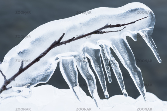 ice covered branch, Lapland, Sweden
