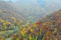 autumn impressions, Ahr valley, Rhineland-Palatinate, Germany, Europe