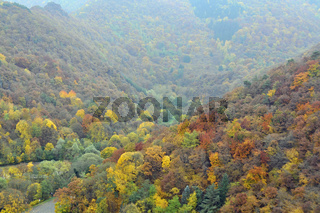 Herbstimpressionen, Ahrtal, Rheinland-Pfalz, Deutschland, Europa