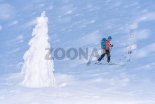 Skifahrer im Schneetreiben, Dundret Naturreservat, Lappland, Schweden