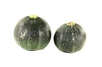 fresh rotund zucchini