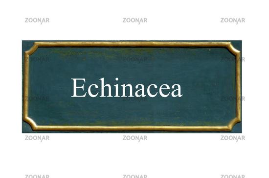 shield echinacea