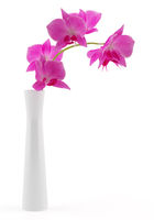 orchid flowers in vase isolated on white background. 3d illustration